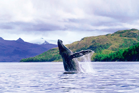 Whale watching in the Magellan strait