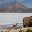 Lodge on the altiplano